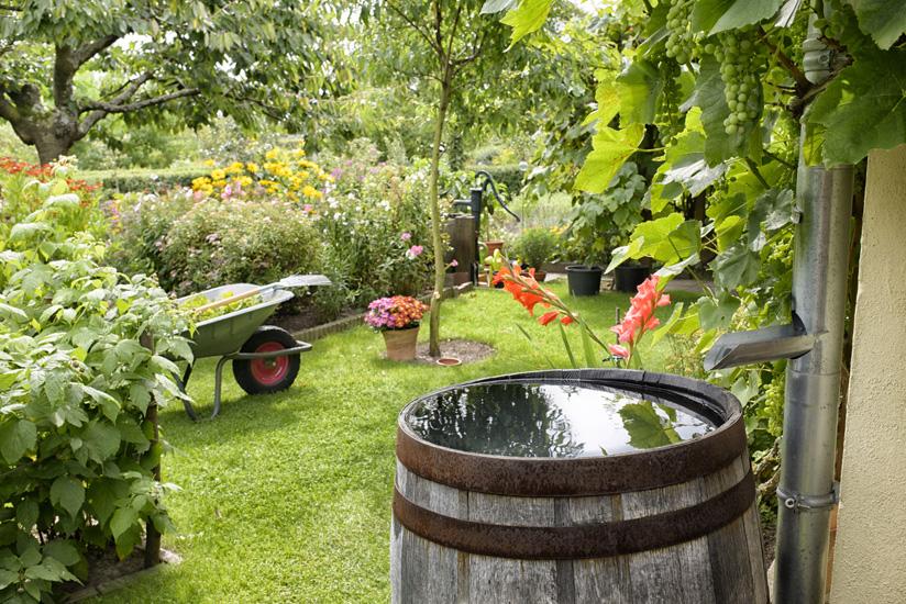 Regenfass Garten