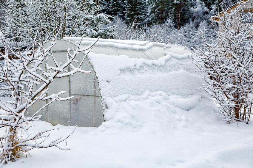 Pflege Im Winter So Machen Sie Ihr Gewachshaus Winterfest