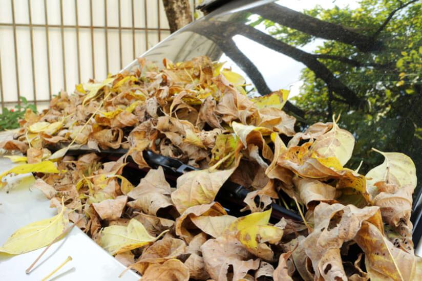 Blätter Frontscheibe Auto