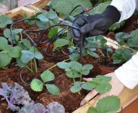 Bewässerungs Set für Gewächshaus