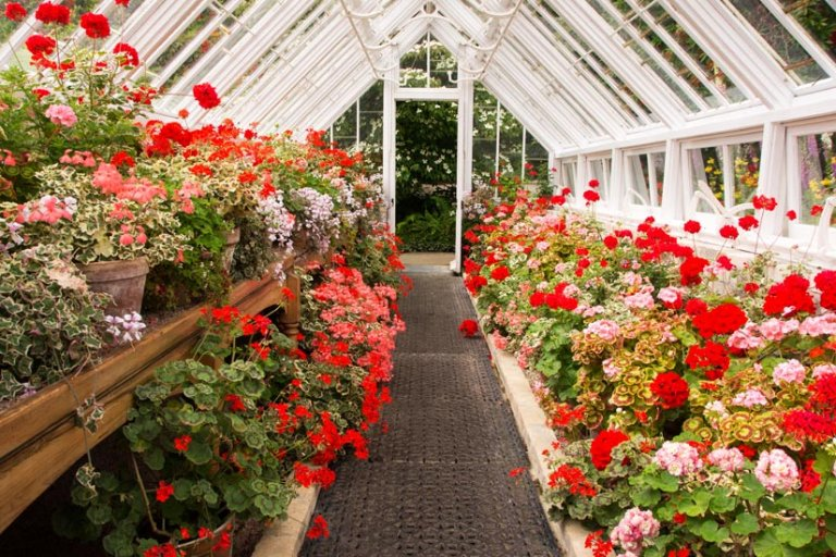 Gewächshaus Blumen rot