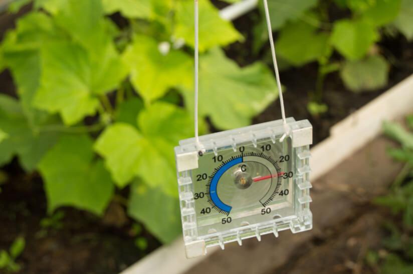 Gewächshaus Temperatur messen