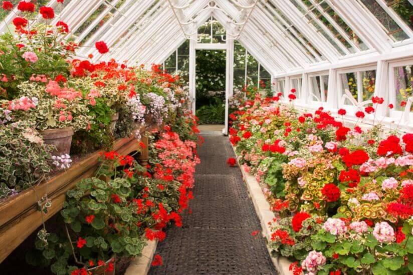 Gewächshaus Blumen